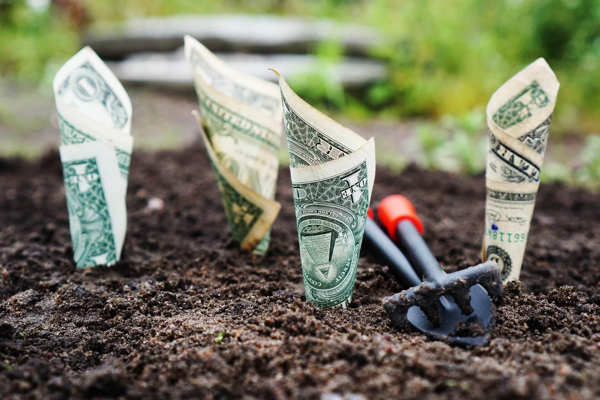geld verdienen door geld te planten